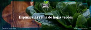 Espinaca, la reina de hojas verdes.