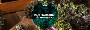 Kale, el Superman de los vegetales